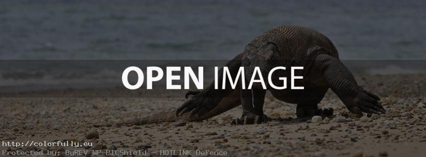 Komodo Dragon – Facebook cover