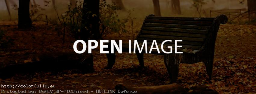Leaves on bench – Facebook cover