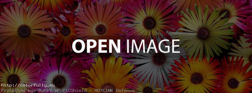 Colorful sunny flowers – Facebook cover