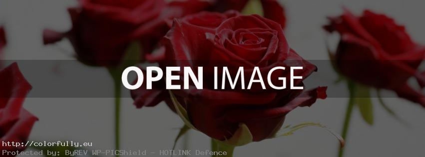Beautiful Red Roses – Facebook cover