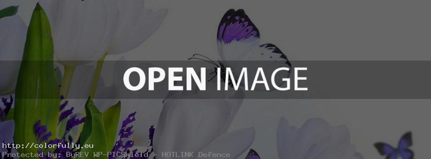 Purple butterfly on tulip flower – Facebook cover
