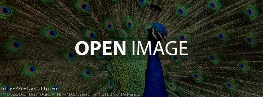 peacock facebook cover