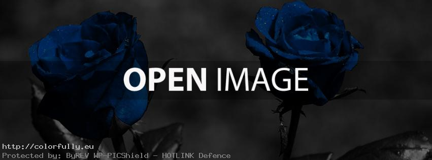 Blue roses – Facebook cover
