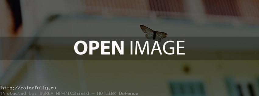 Butterfly – Facebook cover