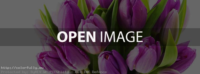 Purple tulips – Facebook cover
