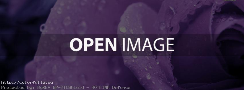 Wet purple rose – Facebook cover