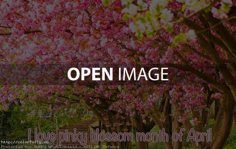 Hello April blossom month